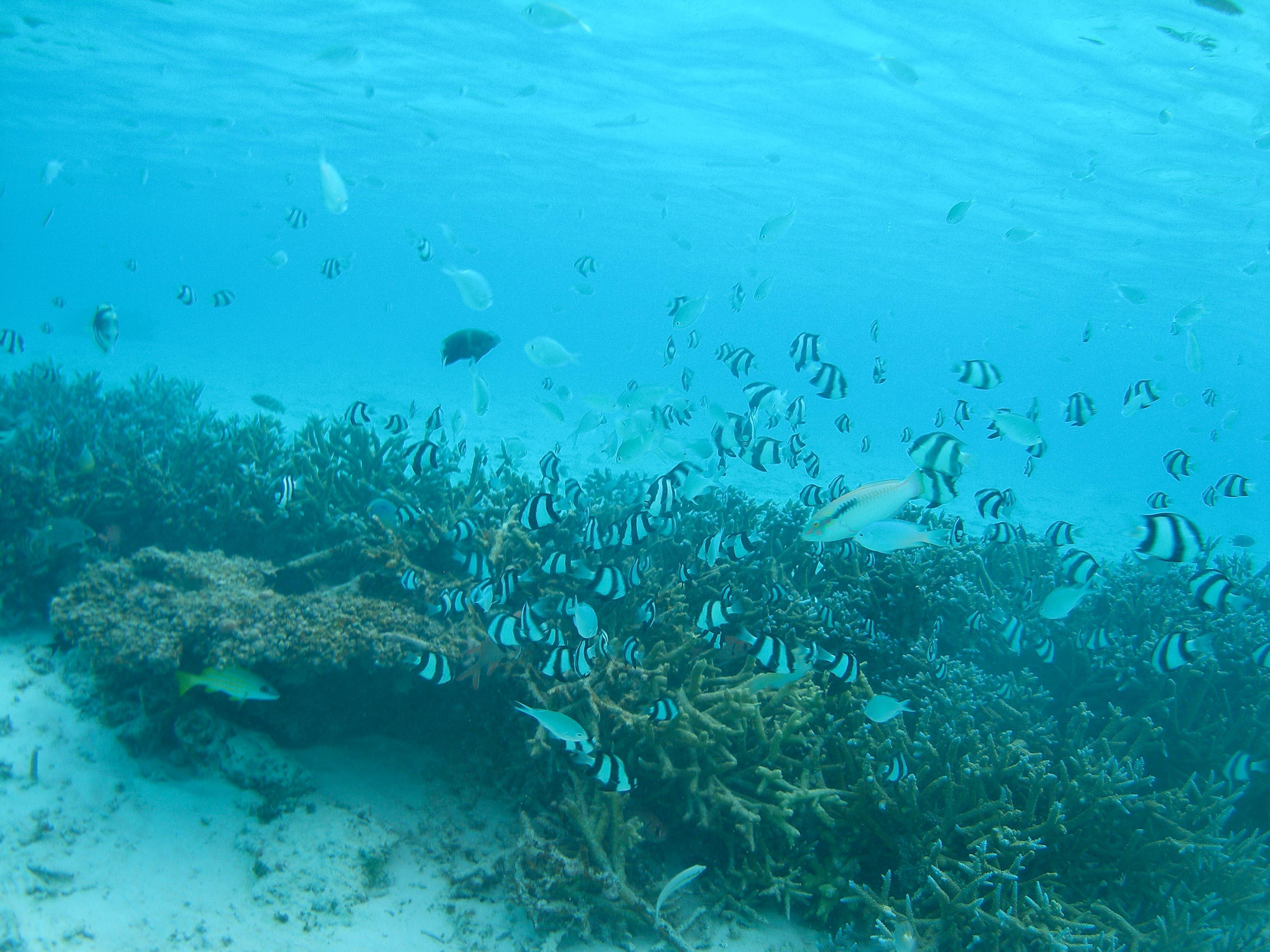 Coral-reef-1M