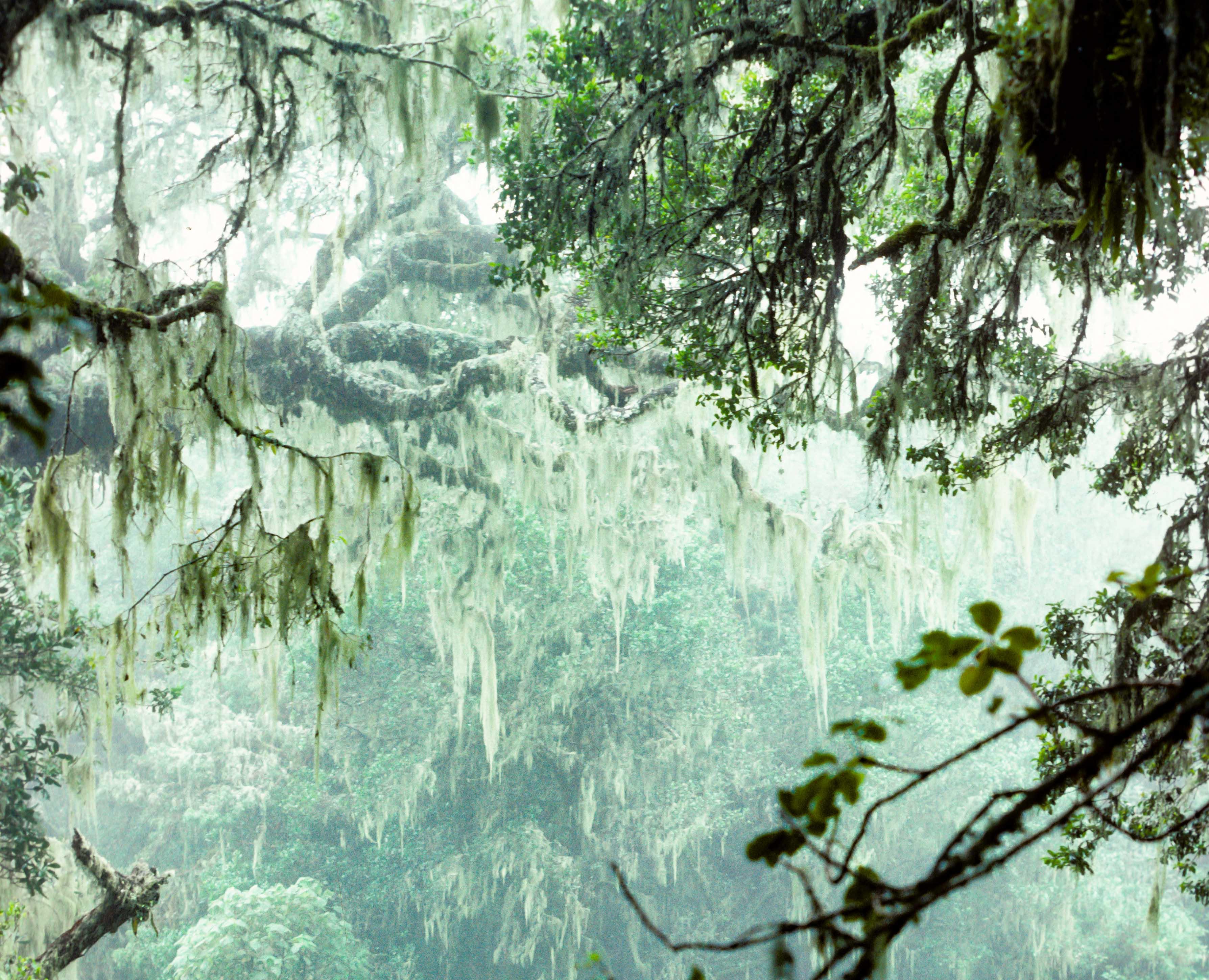 Rain-Forest-1M